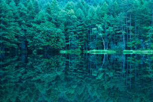 御射鹿池 新緑と映り込みの写真素材 [FYI01806375]