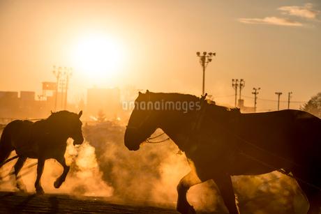 ばんえい競馬の朝調教の写真素材 [FYI01806434]