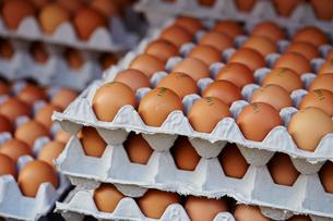 卵のパックの写真素材 [FYI01806460]