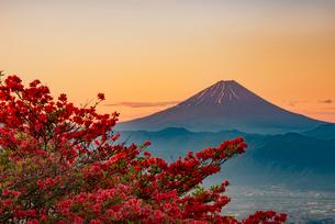 富士山とつつじの写真素材 [FYI01806472]