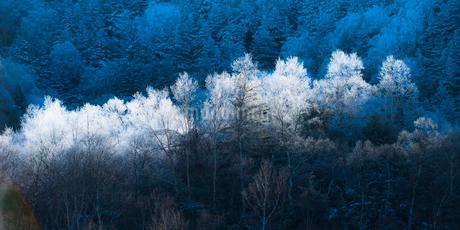 霧氷の写真素材 [FYI01806502]