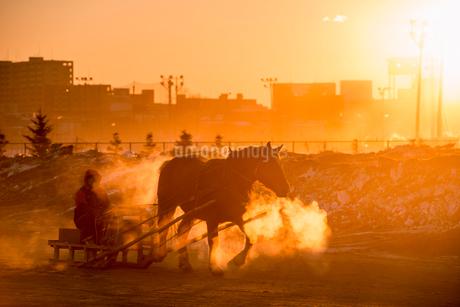 ばんえい競馬の朝調教の写真素材 [FYI01806527]