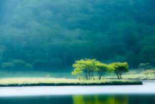水辺の新緑の写真素材 [FYI01806552]