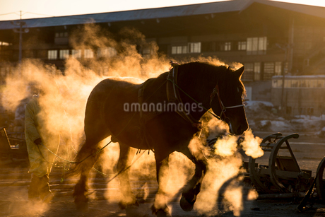 ばんえい競馬の朝調教の写真素材 [FYI01806580]