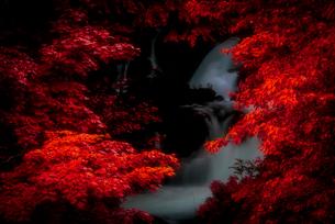 紅葉と滝の写真素材 [FYI01806623]