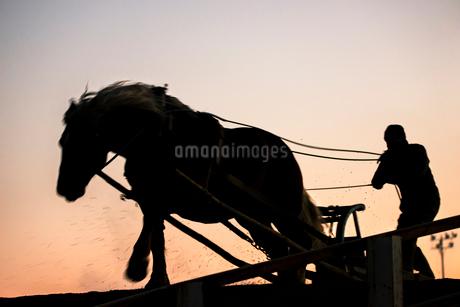 ばんえい競馬の朝調教の写真素材 [FYI01806888]