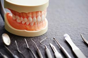 歯の模型と歯科器具の写真素材 [FYI01807341]