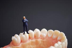 歯の模型とミニチュアの写真素材 [FYI01807435]