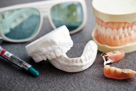 歯の模型の写真素材 [FYI01807532]
