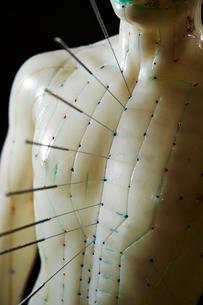 鍼灸模型の写真素材 [FYI01808689]
