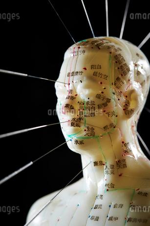 鍼灸模型の写真素材 [FYI01808758]