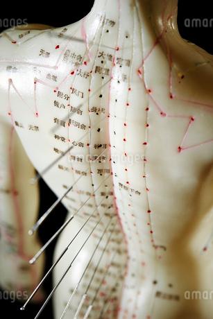 鍼灸模型の写真素材 [FYI01809163]
