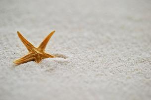 砂浜イメージの写真素材 [FYI01809323]