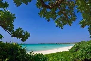 木陰から見える海の写真素材 [FYI01809411]