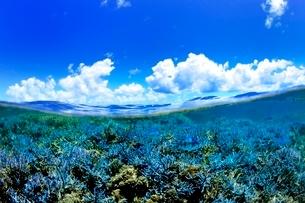 珊瑚礁と熱帯魚の写真素材 [FYI01809725]
