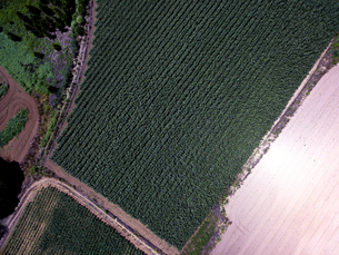 上空から見るトウモロコシ畑の写真素材 [FYI01809732]