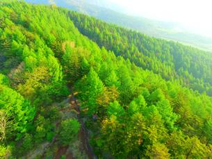 上空から見た唐松林の写真素材 [FYI01809826]