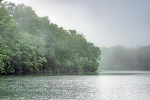 長野県小谷村 新緑の鎌池の写真素材 [FYI01809862]