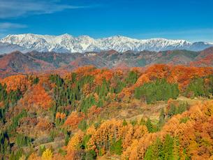 長野県小川村の雪山と三段紅葉の写真素材 [FYI01809879]