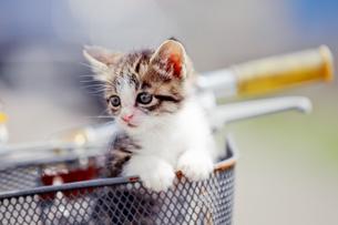 自転車に乗った子猫の写真素材 [FYI01809909]