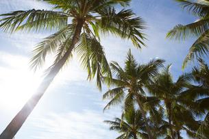ワイキキビーチのヤシの木の写真素材 [FYI01809919]