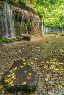 長野県 軽井沢町 白糸の滝の写真素材 [FYI01809932]