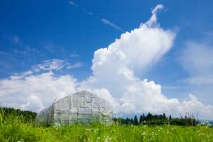 ビニールハウスと積乱雲の写真素材 [FYI01809950]