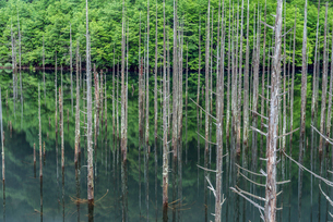 長野県 王滝村 自然湖の写真素材 [FYI01809955]
