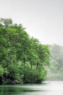 長野県小谷村 新緑の鎌池の写真素材 [FYI01810030]