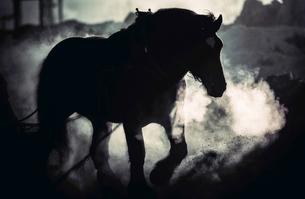 冬の馬の写真素材 [FYI01810045]