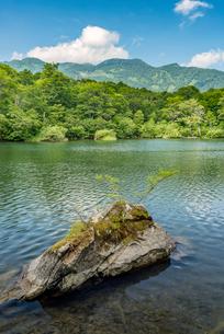 長野県小谷村 新緑の鎌池の写真素材 [FYI01810092]