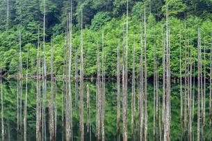 長野県 王滝村 自然湖の写真素材 [FYI01810124]