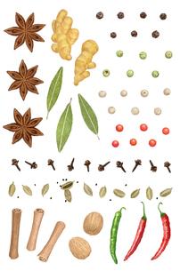 スパイス 色々な香辛料のイラスト素材 [FYI01810149]