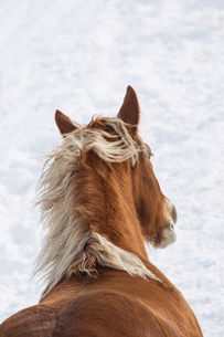 冬の馬の写真素材 [FYI01810154]