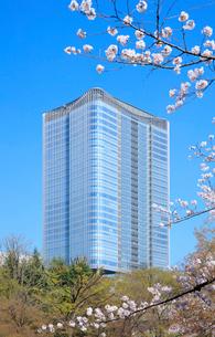 桜と東京ミッドタウン日比谷の写真素材 [FYI01810458]