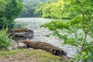 長野県小谷村 新緑の鎌池の写真素材 [FYI01810460]