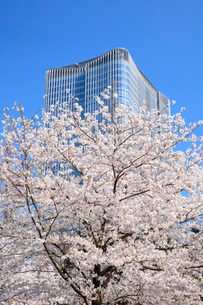 桜と東京ミッドタウン日比谷の写真素材 [FYI01810562]