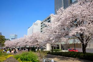 東京ミッドタウンの桜並木の写真素材 [FYI01810570]