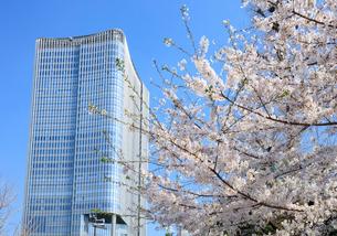 桜と東京ミッドタウン日比谷の写真素材 [FYI01810574]