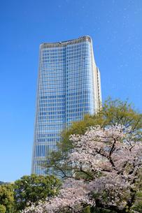 桜と東京ミッドタウン日比谷の写真素材 [FYI01810598]