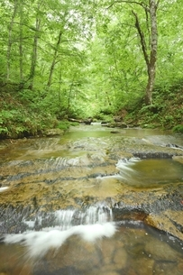 只見町恵みの森、新緑のブナと渓流の写真素材 [FYI01810605]