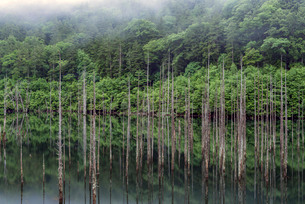 長野県 王滝村 自然湖の写真素材 [FYI01810640]