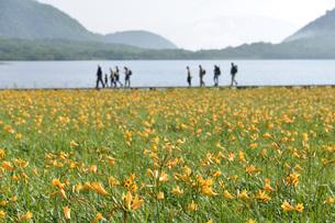 雄国沼湿原のニッコウキスゲ群落とハイカーの写真素材 [FYI01810835]