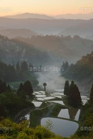 山古志の棚田の夜明けの写真素材 [FYI01810879]