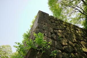 金沢城公園の石垣の写真素材 [FYI01810881]