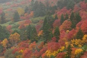 秋の吾妻連峰、魔女の瞳の五色沼の写真素材 [FYI01810925]