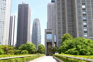 新宿の都庁と高層ビルと緑と青い空の写真素材 [FYI01811155]