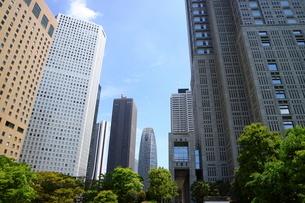 新宿の高層ビルと緑と青い空の写真素材 [FYI01811195]