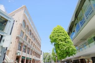 横浜元町の風景の写真素材 [FYI01811347]