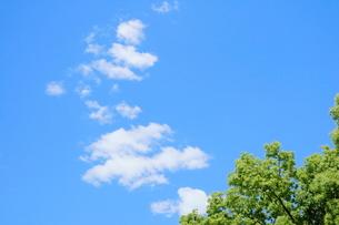 横浜の公園の緑と青い空の写真素材 [FYI01811353]